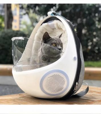 Balo cho mèo - Lợi ích và những mẫu balo thịnh hành nhất 2020
